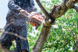 Vail Tree Removal Service